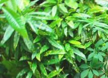 観葉植物に適した光源はどれ?
