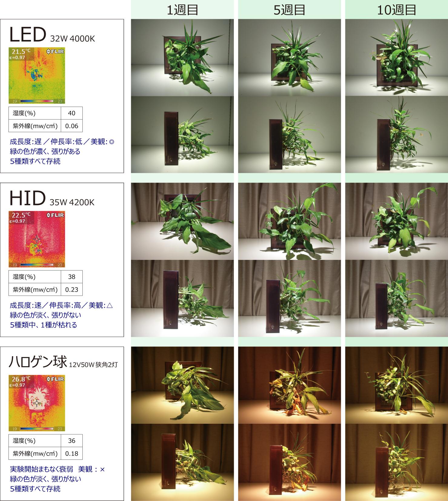 midorie実験02