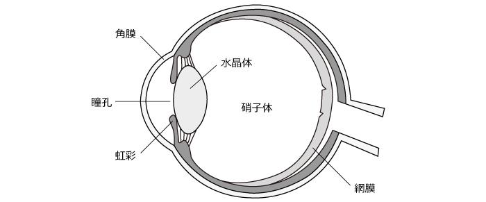 eye_kouzou